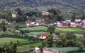 Campos de Berastagi