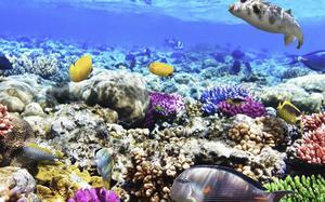 Fondo marino del Mar Rojo