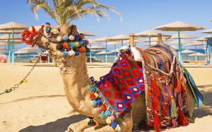 Camello de relax en la playa