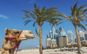 Playa camello