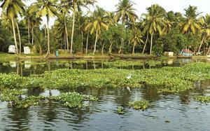 Paisaje de Kumarakom