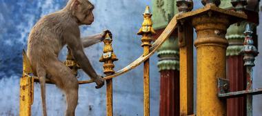 Viajes a Varanasi