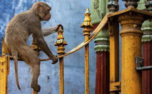 Templo en Varanasi