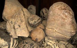 Museo de Nazca
