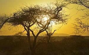 Sabana de Samburu al atardecer