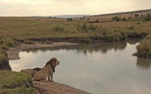 Parque Nacional de Masai Mara