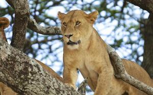 Parque Natural, Arusha