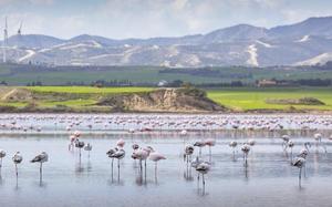 Lago de los flamingos