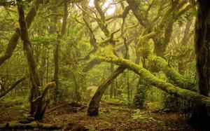 Parque Natural de Garajonay