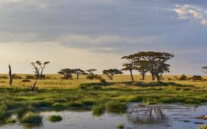 Panorámica del Parque Natural de Serengeti