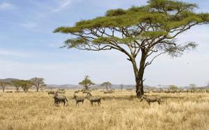 Sabana en Serengeti
