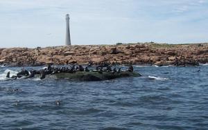 colonia lobos marinos