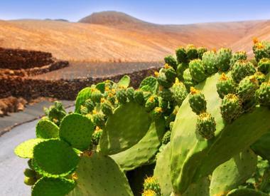 Viajes a Lanzarote
