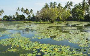 Lago de lotus