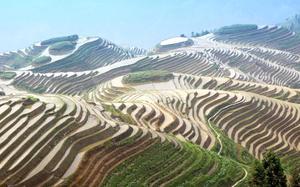 Arrozales en la provincia de Guangxi