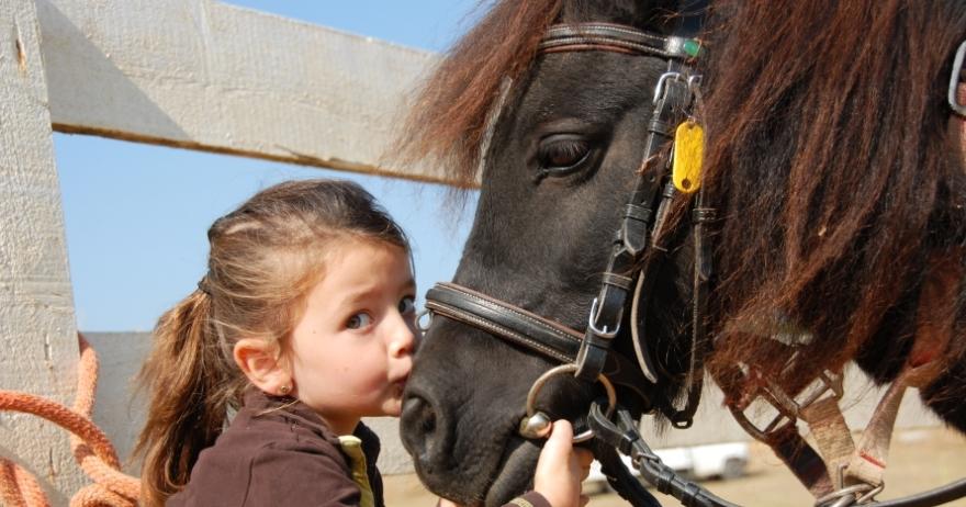 Acercamiento a los caballos