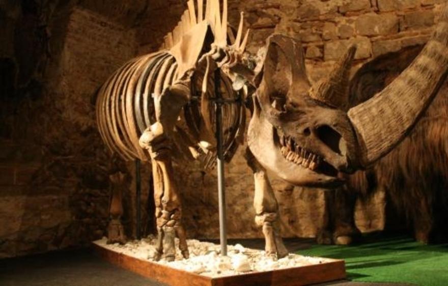 Museo del Mamut: un viaje a la Edad de Hielo