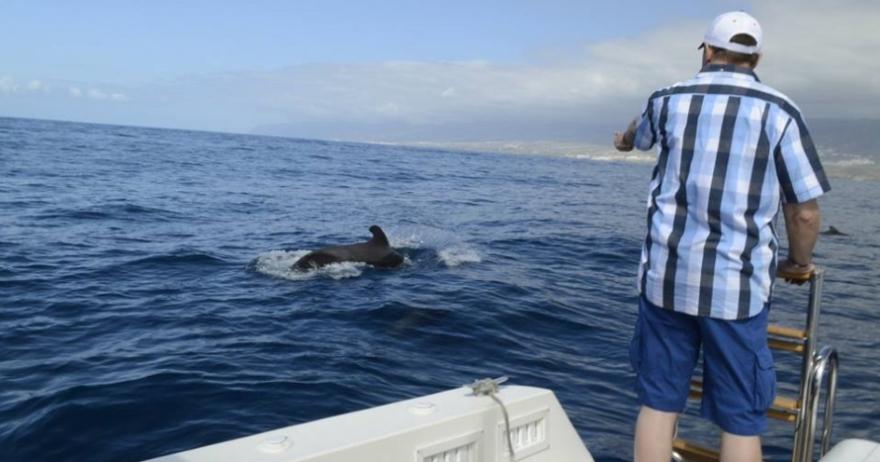 Avistamiento de delfines y ballenas en libertad