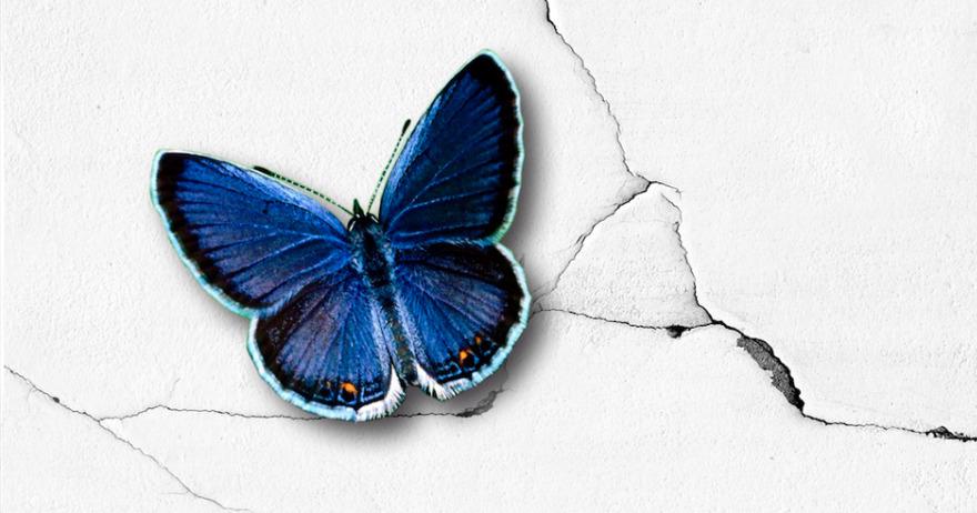 Efecto Mariposa (a la espera)