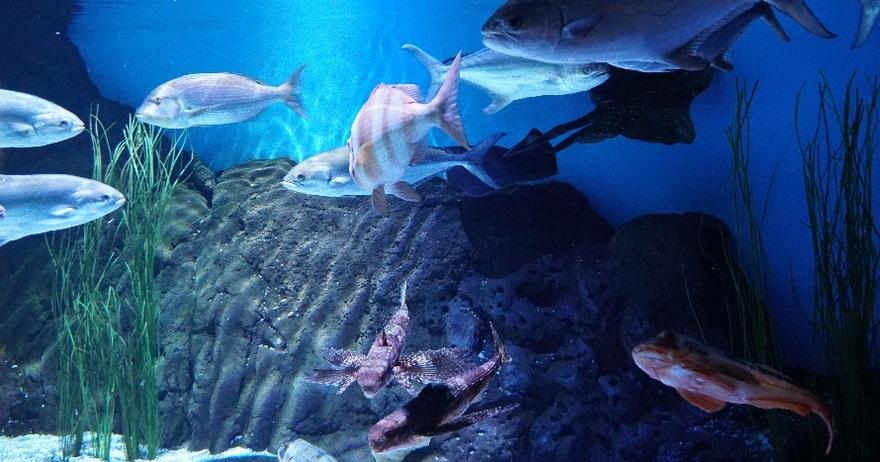 Cupones descuento acuario de sevilla