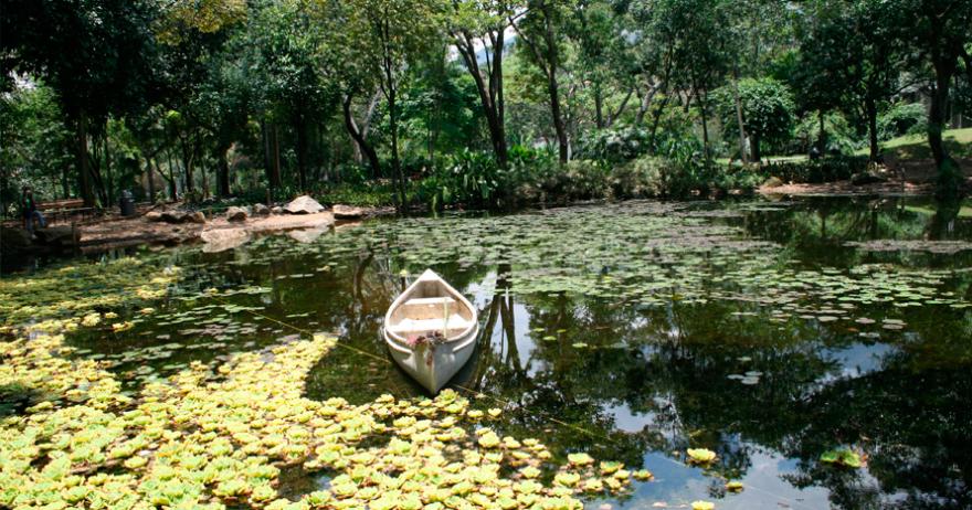 Picnic para 2 en el jard n bot nico de medell n medell n for Bodas en el jardin botanico medellin