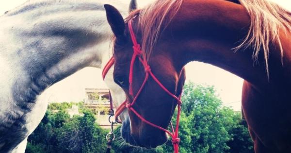 Hípica en familia: ¡aprende a montar a caballo!