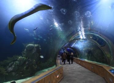 Entradas para sea life benalm dena benalm dena - Entradas acuario sevilla ...