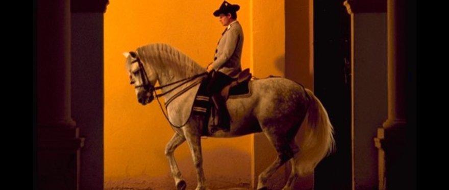 C�mo bailan los caballos andaluces