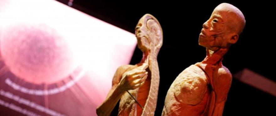 Human Bodies The Exhibition