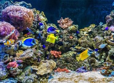 Entradas para oceanogr fic de val ncia valencia for Aquarium valencia precio