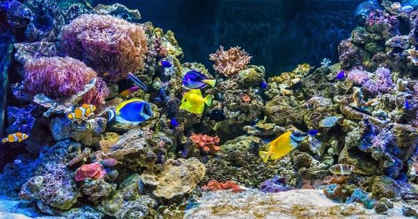 Entradas Para Aquarium Costa De Almer A Roquetas De Mar