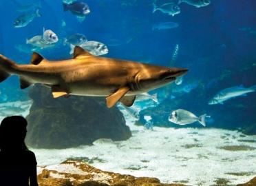 Entradas para oceanogr fic de val ncia 15 dto valencia for Aquarium valencia precio