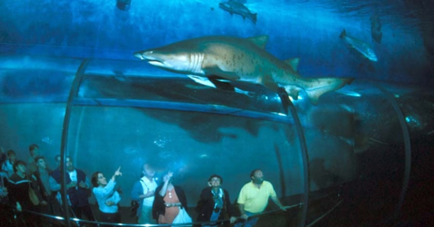 Entradas para l 39 aqu rium de barcelona barcelona for Aquarium de barcelona