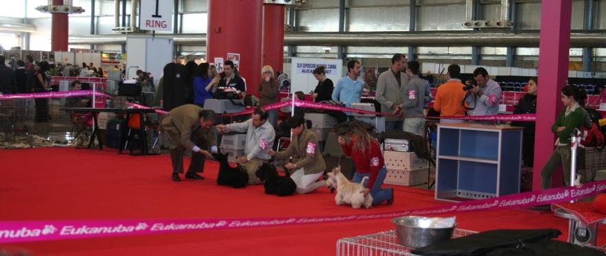 Exposiciones Nacional e Internacional Canina