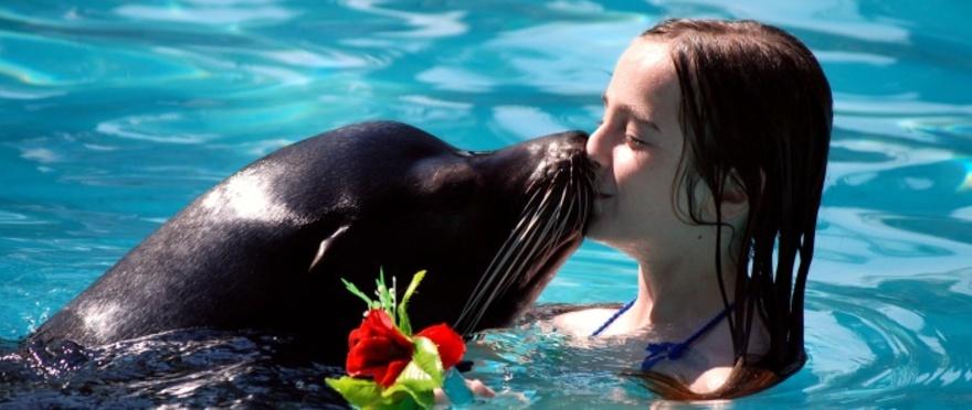 Baño con leones marinos