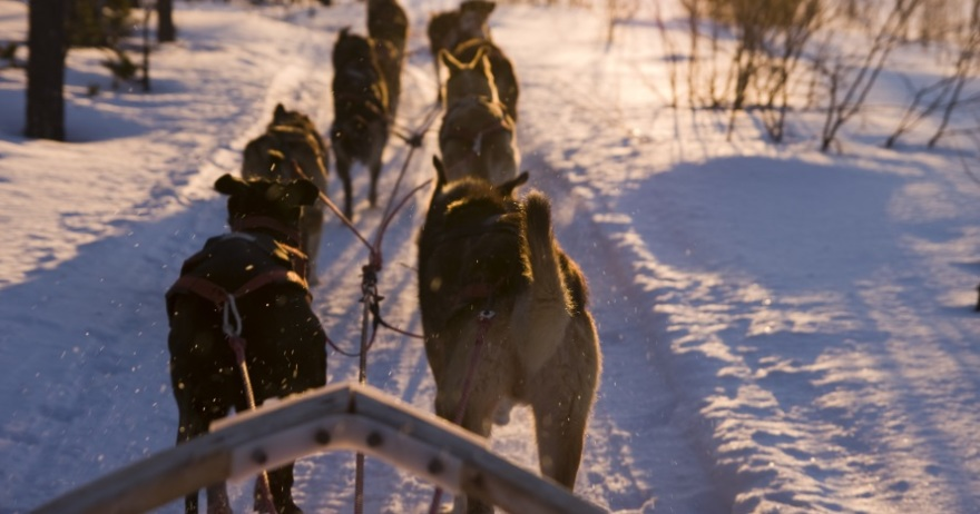 Mushing 1,5 km: paseo en trineo tirado por perros