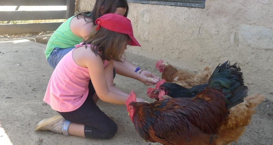 Toca los animales de la granja y descubre la masía
