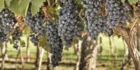 Disfruta entre viñas en el Hotel Milagros Rio Riaza 3*