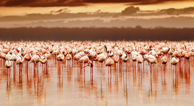 Safari en Kenya y playas de Zanzíbar