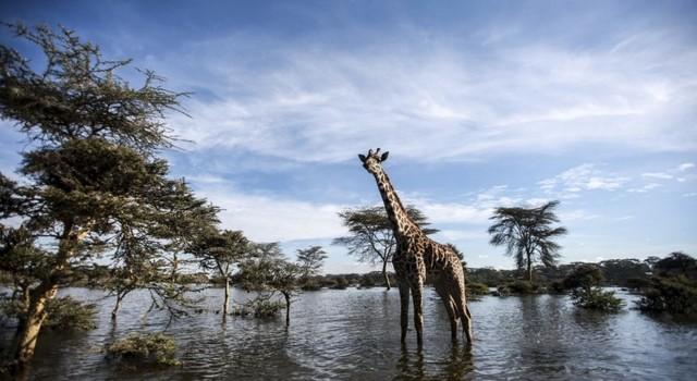 viaje safari kenia