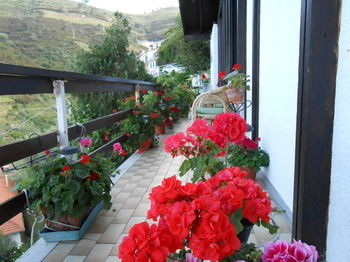 Bed & Breakfast Cinqueterre Holidays
