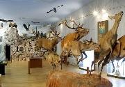 Entradas en Museo de la Naturaleza Valle del Alberche (MNVA)