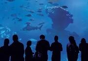 Entradas en Palma Aquarium