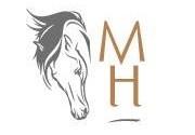 Actividades en Mallorca Horses