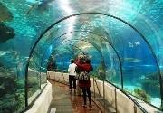 Espectáculos en Sea Life Benalmadena