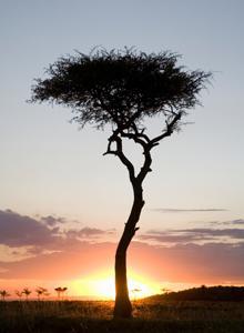 Descubre la Kenya más desconocida con un 35% Dto.